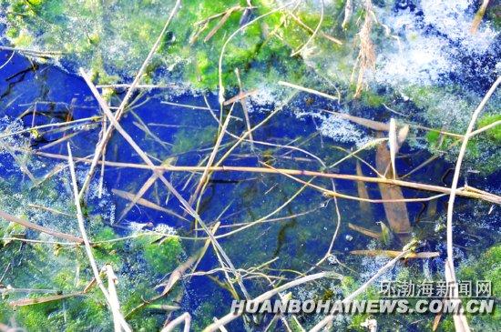 综合新闻 正文    环渤海新闻网消息 近日,在唐山湾国际旅游岛的菩提