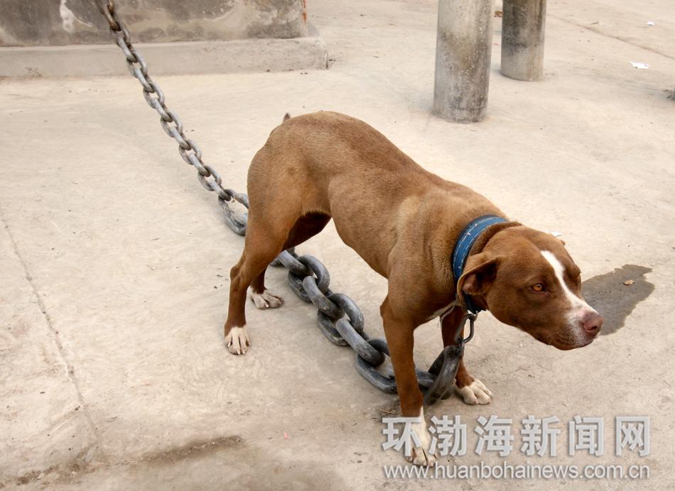丰润动物防疫站
