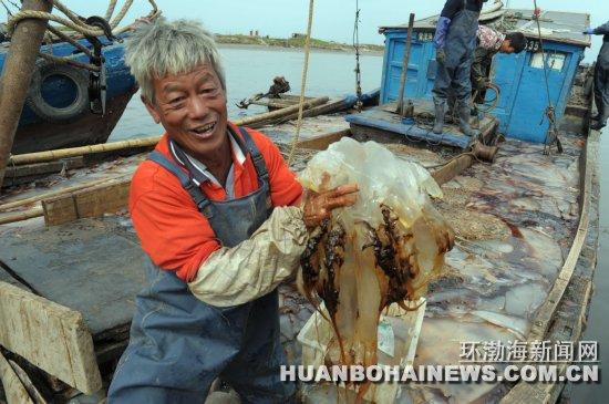 海蜇丰收渔民喜_图说新闻