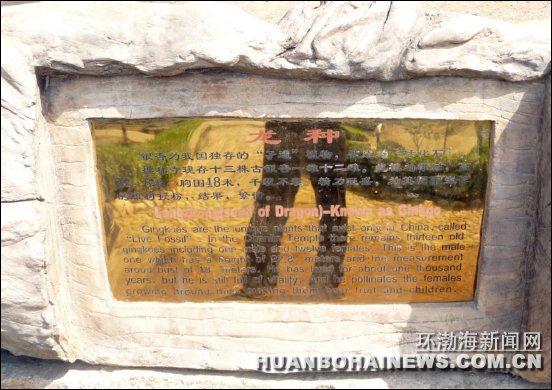 汤泉省级皇家旅游度假区,禅林寺古银杏风景区及国家aaaa级景区万佛园