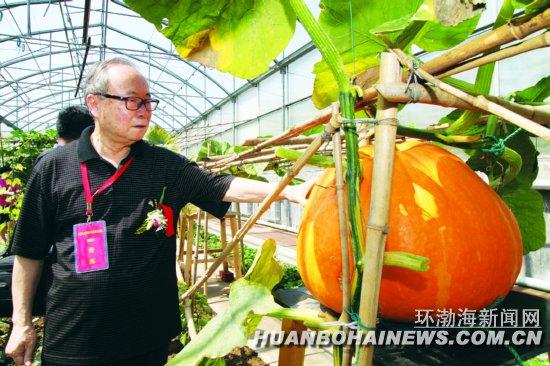 """唐山:遵化""""太空蔬菜""""喜获丰收(图)"""