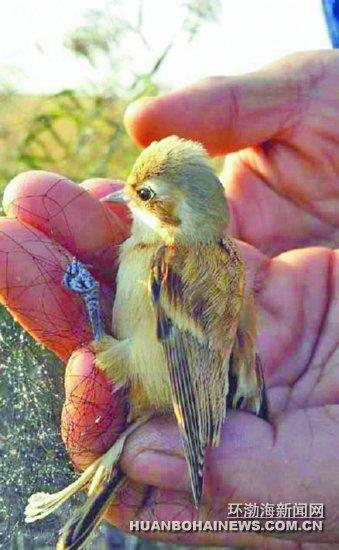 野生动物保护志愿者:为候鸟南迁护航(图)