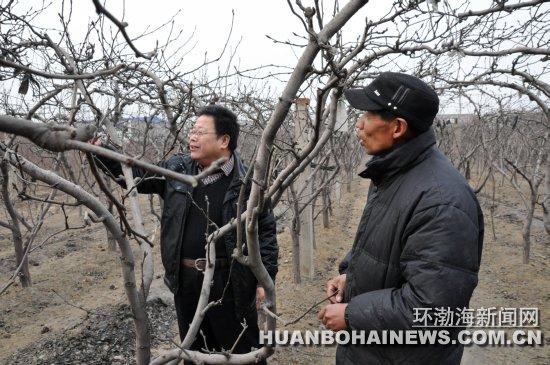 梨树冬季修剪技术