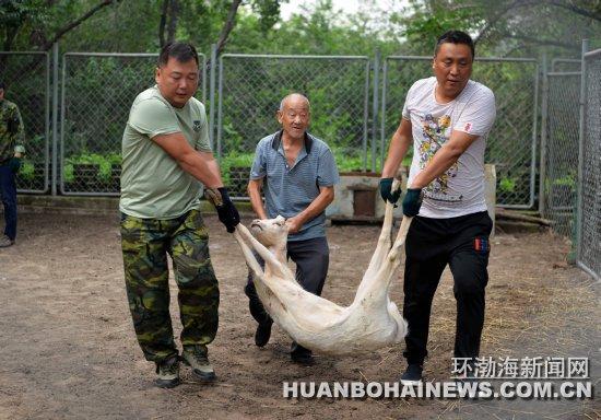 大城山动物园中动物昨起陆续搬迁至唐山市动物园
