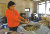 寄托村民生活希望 500公斤咸麻鸭蛋急需售出(图)