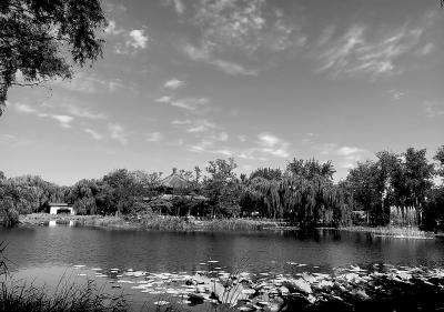 圆明园千亩荷塘不耗一滴新水湖水透亮清澈