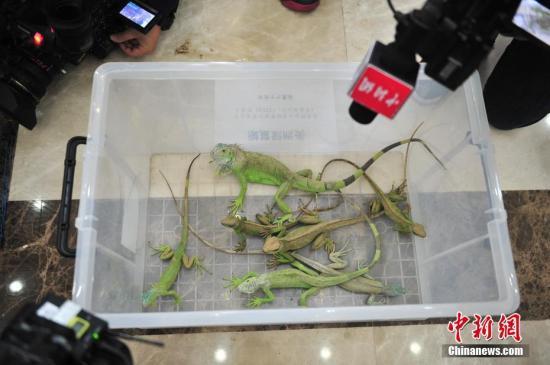广州端掉一个走私野生动物团伙 查获陆龟522只