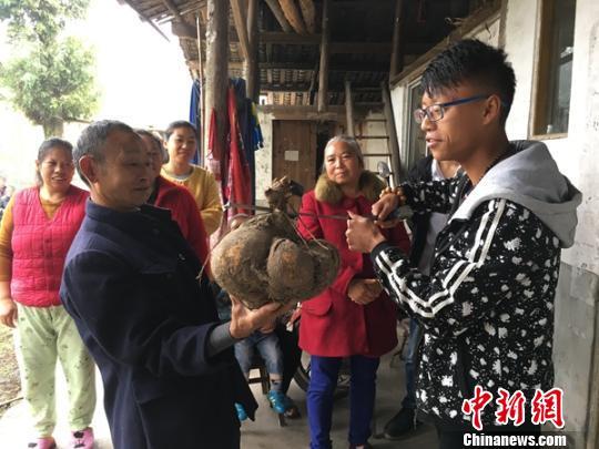 """四川洪雅村民挖出""""巨无霸红薯"""" 重13斤长30厘米"""