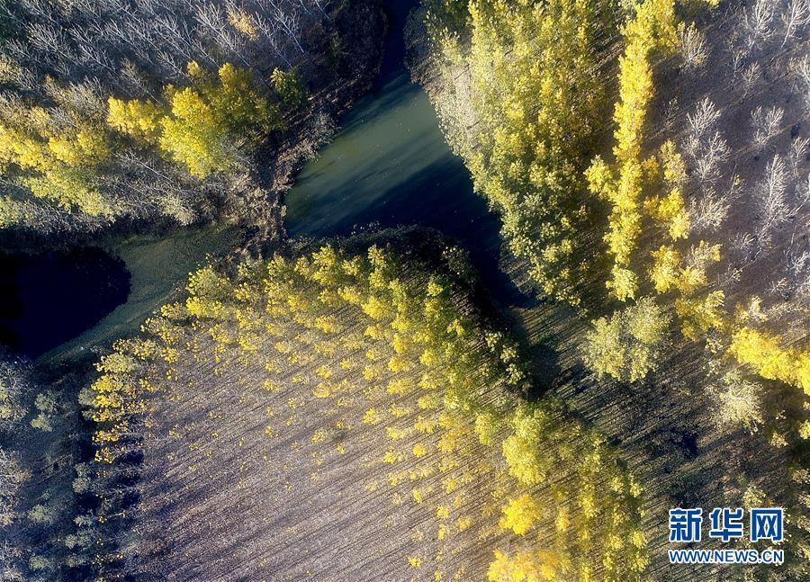 水库防护林美景如画