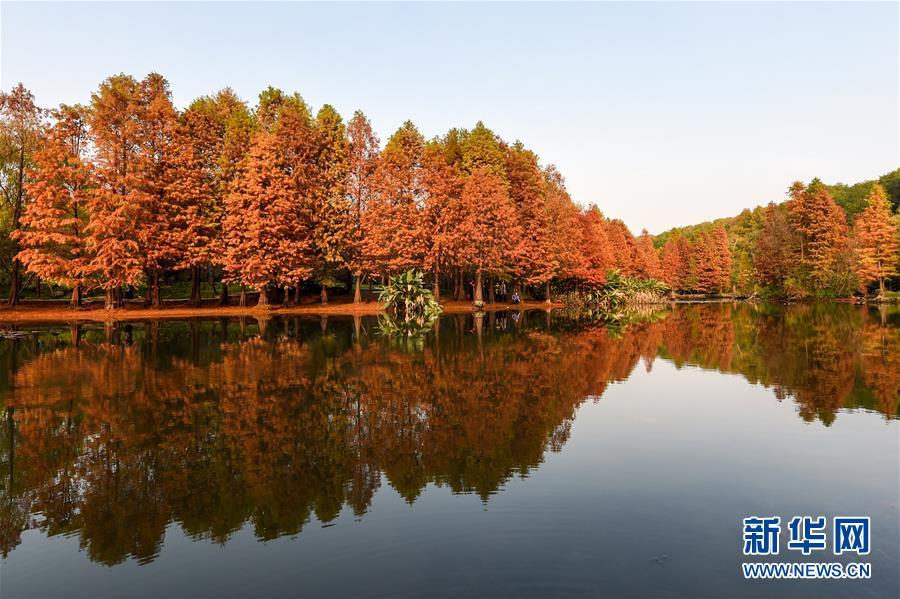 江苏南京:初冬景色美