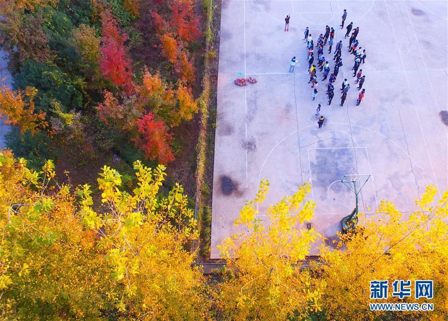 湖南衡阳:冬日多彩校园