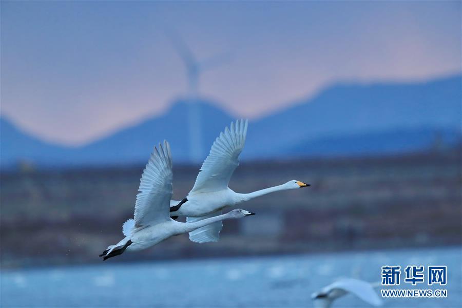 韵动天鹅湖