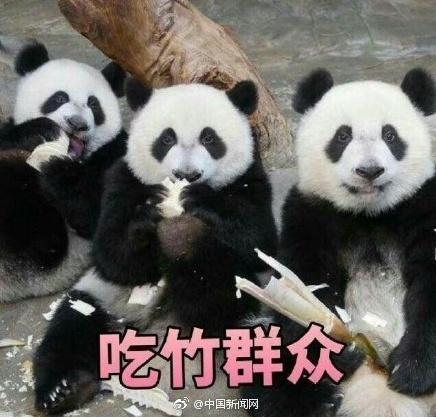 大熊猫便便做成纸巾了! 你要不要买一包来擦擦嘴?