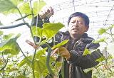 大棚蔬菜助农增收(图)