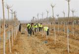 唐山:遵化千余人义务植树15000棵(图)