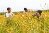 特色种植助农增收(图)