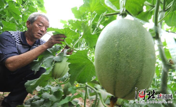 今后三年河北省每年在贫困地区创建10个省级现代农业园区