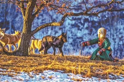 """95后女孩""""与狼共舞""""成网红 每天剁50斤肉喂8匹狼"""