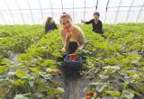 农民合作社助增收(图)