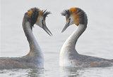 南湖野鸟舞翩翩(图)