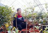 """""""盆栽经济""""助农增收(图)"""