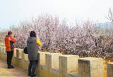 春满凤凰城(图)