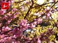 视频:唐山花开春正好