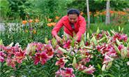 滦州:特色种植盘活城郊乡村经济