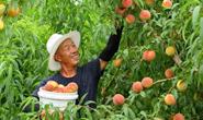 新华社聚焦!滦南壮大果蔬产业,助推乡村振兴