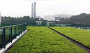 市领导就城市屋顶绿化项目到企业调研