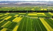 河北71县要推广这些农作物,实施范围、补助标准公布