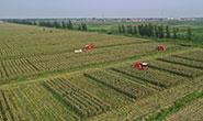 唐山这些地方入列!河北将建6个鲜食玉米商业化种植基地及示范园区
