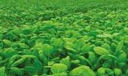 河北省出台做大做强农业优势特色产业行动方案 7大类优势特色产业引领现代农业发展