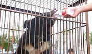 猕猴、黑熊、非洲狮……唐山迁安警方破获一起非法贩卖、运输野生动物案
