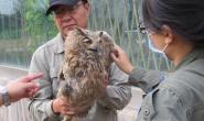 """供电职工爱心救助国家二级保护动物""""雕�^(xiāo)"""""""