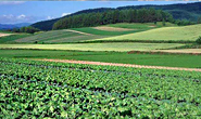 全年谋划实施重点建设项目209个!亚博足球官网召开农业产业化重点项目建设座谈会