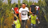 """唐山高新区""""玉米迷宫"""":十一长假乡村旅游好去处"""