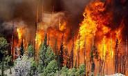 警示!河北省林草局公布十起森林火灾典型案例