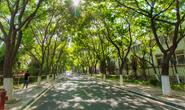 唐山今年秋冬季将狠抓交通干线、河流水系生态廊道绿化及十大造林工程