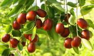 秋季水果大量上市价格亲民