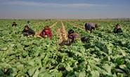 河北滦州:壮大萝卜富民产业