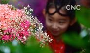 河北唐山:鲜花迎新春