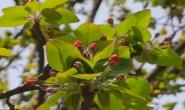视频|你们要的春暖花开,来啦!