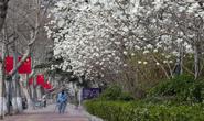 路北区:加大城市整治力度 扮靓城市春天