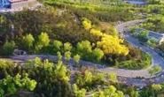 视频|路南全面打响春季补种补植攻坚战