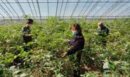 丰润:发展大棚果蔬种植 拓宽增收渠道