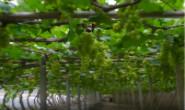 河北丰南:特色林果种植铺就百姓致富路