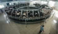 新华社聚焦 丰润发展奶牛养殖助力乡村振兴