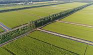曹妃甸聚享水稻种植专业合作社:厚道粮农 匠心种植