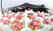 组图|乐亭:鲜桃映红丰收季